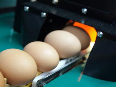 卵質測定装置